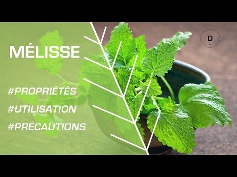 Comment utiliser la mélisse ? Phytothérapie