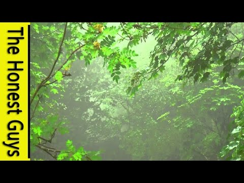 GUIDED Sleep Talk Down to Rain Sounds. Deepest Relaxation to Nature Sounds