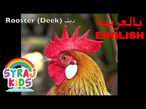 Learn Farm Animals English & Arabic (Bilingual) حيوانات المزرعة بالعربية و الانجليزية