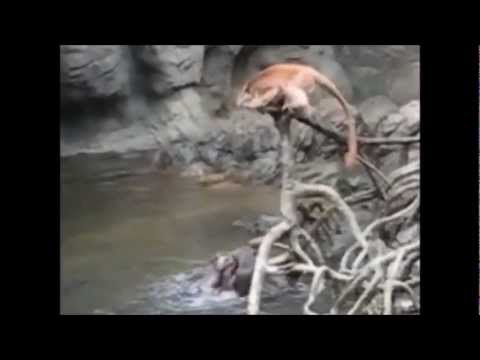 Otter Revenge - The Day the Monkeys Went Too Far
