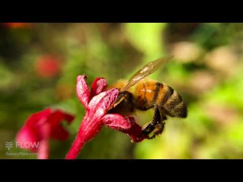 Spring bees - slow motion iPhone