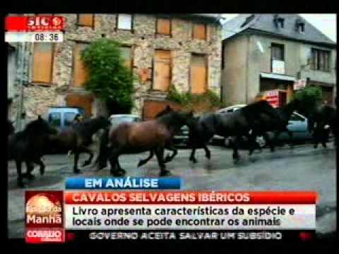Cavalos Selvagens Ibéricos