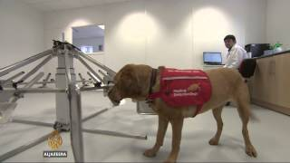 Study: Dogs can detect some cancers with 90% success - ALJAZEERAENGLISH