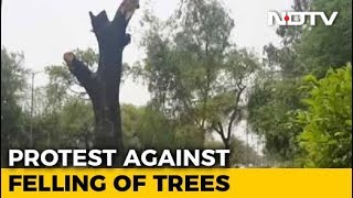 17,000 Trees To Be Felled In Delhi For Government Housing: Official - NDTV