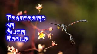Royalty Free Traversing an Alien World:Traversing an Alien World
