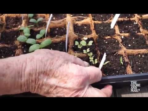 Gardening Basics: Tricks and tips for growing plants from seed