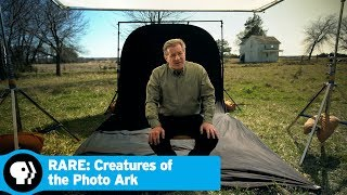 RARE: CREATURES OF THE PHOTO ARK | How the Photo Ark Began | PBS - PBS