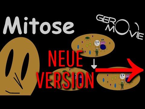 Mitose Biologie GeroMovie