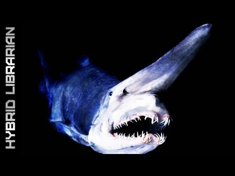Deep Sea's 10 Most Amazing Creatures
