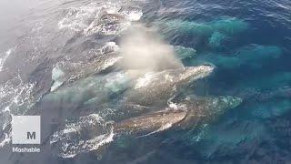 فيديو| صيد الحيتان فى أمريكا بطائرات دون طيار