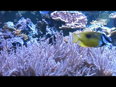 Relaxing Music Therapy - Relaxing Nature Scenes - Relaxing Aquarium (Insomnia Remedy)
