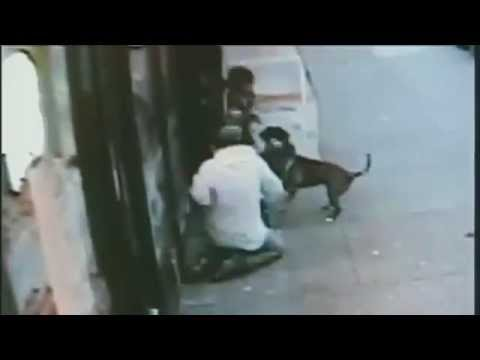 CCTV 2 Pit Bulls viciously attack 62 year old woman on the street