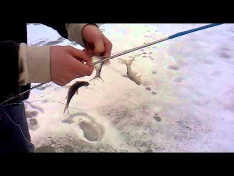 ловля судака на косынку