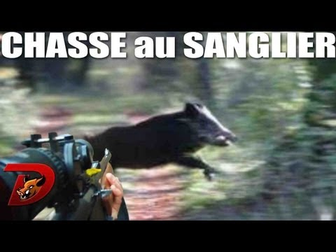 Chasse battues aux sangliers dans l Aube partie 2