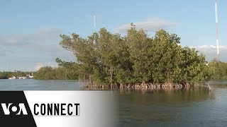 Protecting the Shoreline - VOAVIDEO