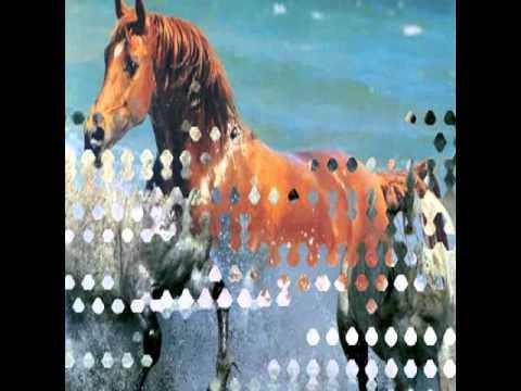 Jorge Kaalebe - Cavalos Selvagens