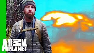 Forrest Spots a Sprinting Wolf With A Thermal Drone! | Extinct or Alive - ANIMALPLANETTV