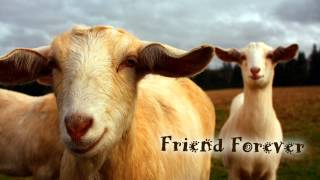 Royalty Free :Friend Forever
