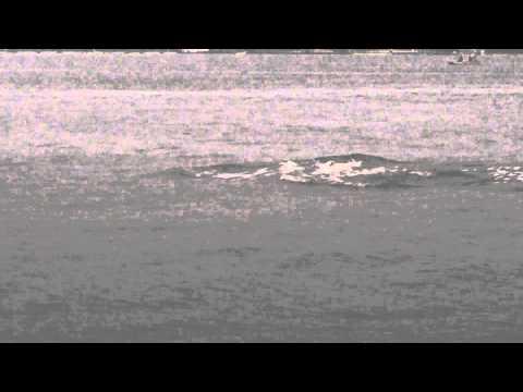 Dolphins under the Solomons Bridge (2)