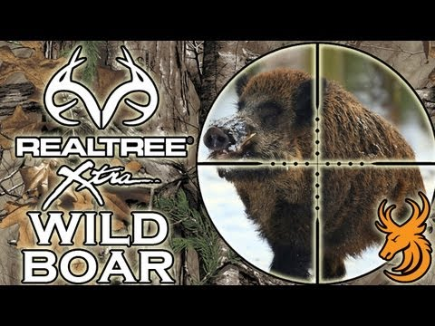 Driven Wild Boar Hunt Czech Republic