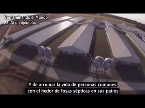 Granja Industrial producción Cerdos EE.UU: Contaminación oculta