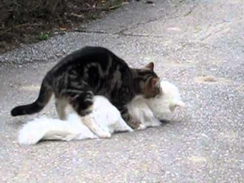 Spomladansko parjenje mačk - AKCIJA :-)
