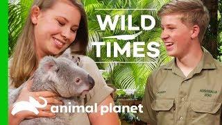 Meet Dexter The Cuddly Koala! | Wild Times - ANIMALPLANETTV