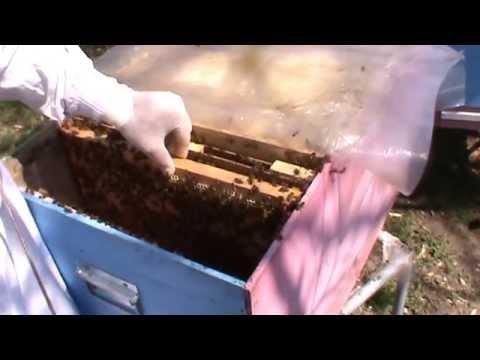 Largirea cuibului | Problema familie de albine besmeticita | Lucrari stupina | Apicultura incepatori