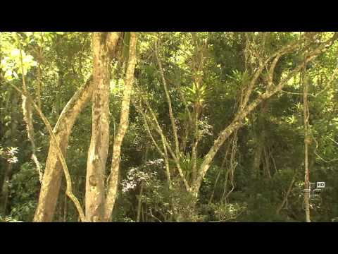 Sabesp incentiva reflorestamento das margens dos rios