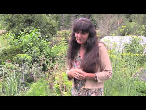 Rosemary Gladstar's Garden Wisdoms: Cilantro, Dill, and Carrot Family Plants