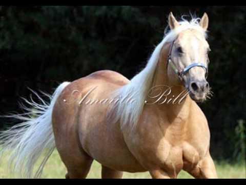 Amarillo Bill - Cavalo Quarto de Milha