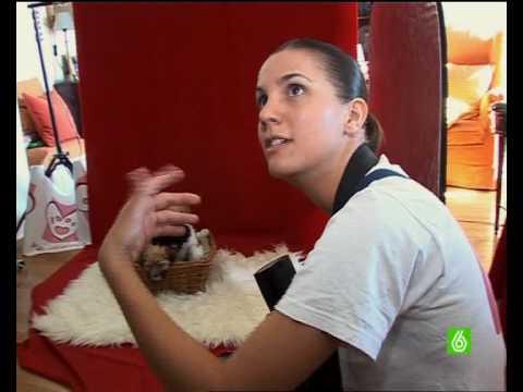 Fotografía de Mascotas - MascotaFoto.com