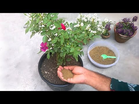 natural fertilizer to grow mustard plant