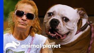 Bulldog Reunited With Family After Being Abandoned At Villalobos | Pit Bulls & Parolees - ANIMALPLANETTV