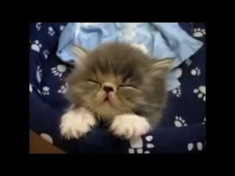Top 10 yatan heyvanlar   top 10 sleepy animlas