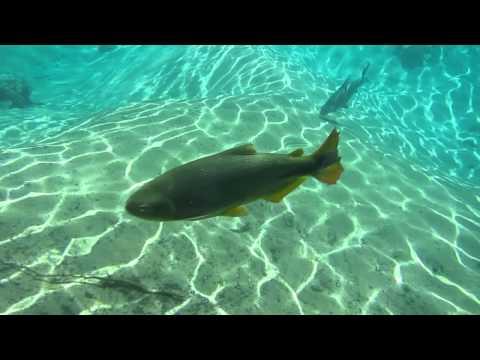 Snorkeling at Rio da Prata # 276 Brazil