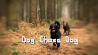 Royalty Free :Dog Chase Dog