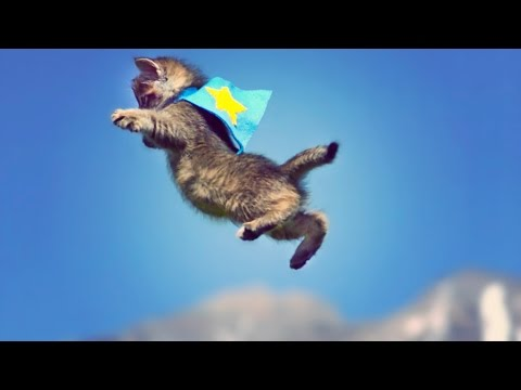 The best slow motion kittens flying through the air to hip-hop video you'll see today...