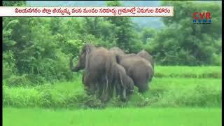 Elephant groups Hulchul in Vizianagaram | CVR NEWS - CVRNEWSOFFICIAL