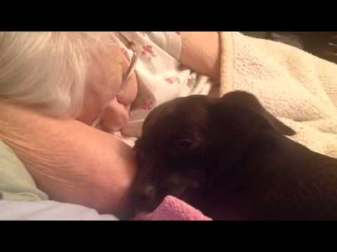 Grandma sleeping - snoring - loving watch dog babysits