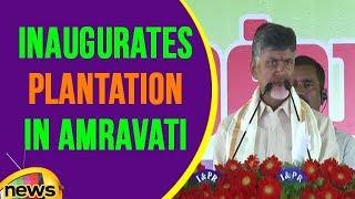 AP CM Chandrababu Naidu Inaugurates Plantation In Amravati | Mango News - MANGONEWS
