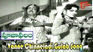 Vanne Chinneladi Gulabi Song | Pooja Phalam Movie Songs | ANR | Savitri | Jamuna - TELUGUONE