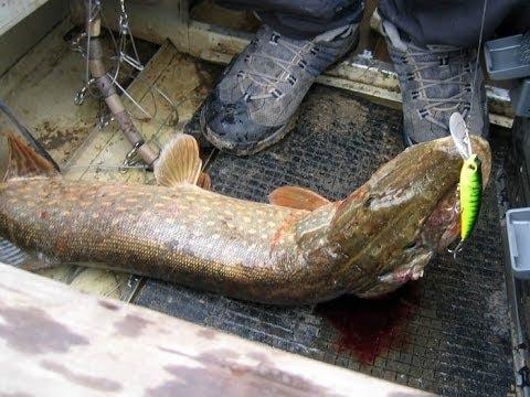 рыбалка в исадах рязанская область