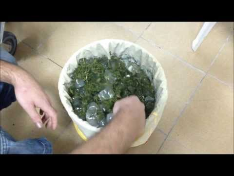 Extraccion de hachis