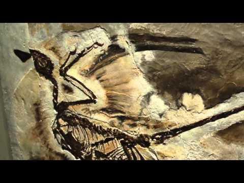 Seraphim: Angelology Exhibit