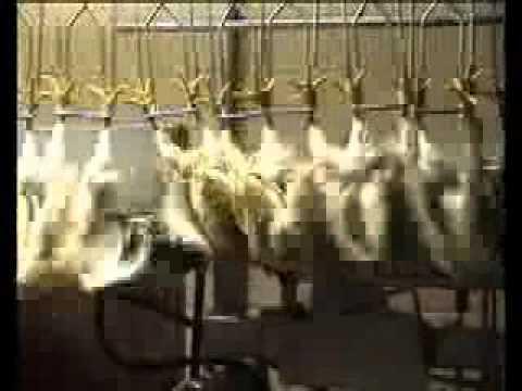 Matadero de pollos