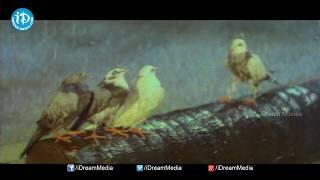 Urumochesindoy Song || Romantic Song 37 || Chiranjeevi, Roja Romantic Song - IDREAMMOVIES