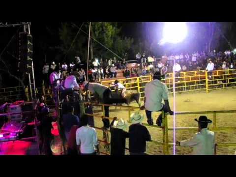 Toro Destructor del Rancho los tres Potrillos de Zimatlan de Alvarez Oaxaca