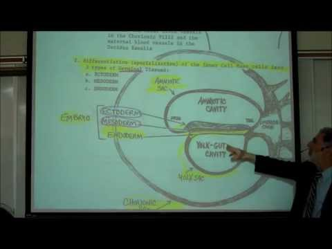 INTRO TO HUMAN EMBRYOLOGY; PART 1 by Professor Fink