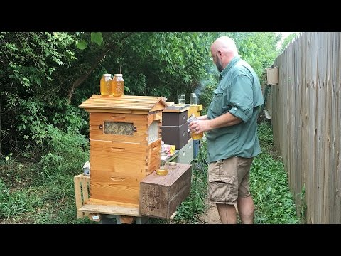 How to be a beekeeper not a bee-haver